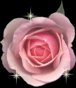 Burns Robert Miła Ma Jak Czerwona Róża